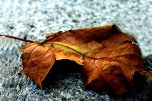 daun kering
